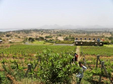 Zampa vineyard