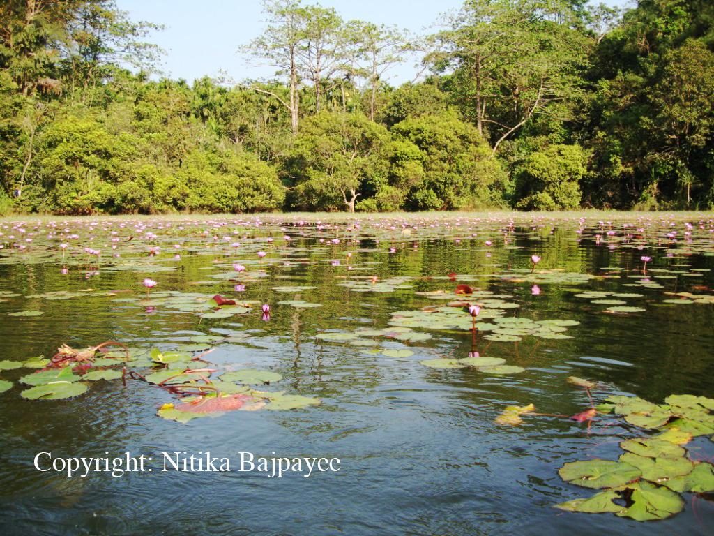 Postcards from Kerala - Pookode Lake